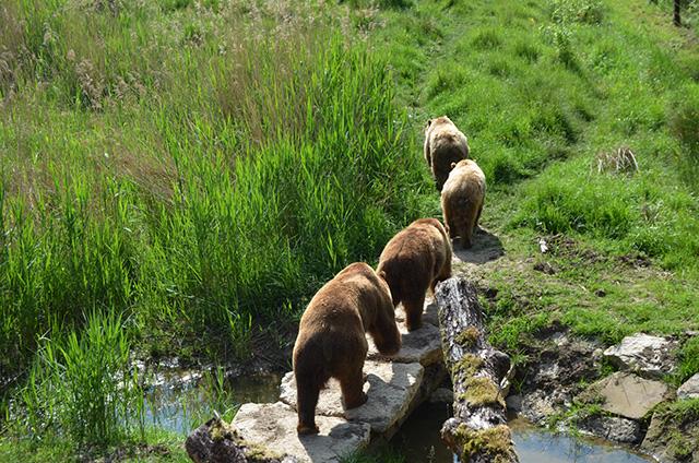 Die Bären, Parc Animalier de Sainte-Croix