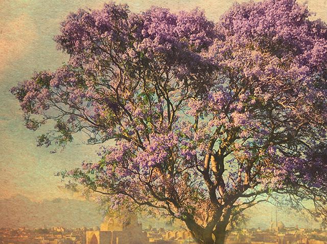 Sahar Delijani / Kinder des Jacarandabaums