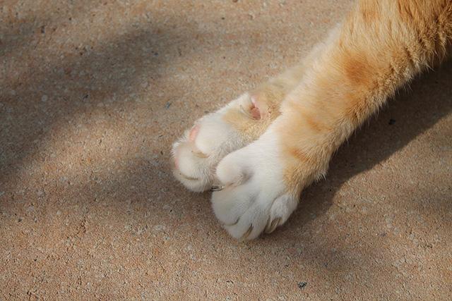 sam_gasson-gone_cat_die_stumme_zeugin-bild